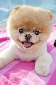 we have collected the following 50 cutest mobile wallpapers for your mobile phones i am sure they can freshen up your mobile imately