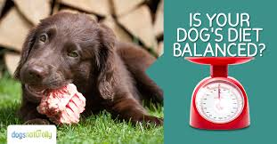 Did You Feed The Dog Chart How To Balance The Calcium And Phosphorus In Your Dogs Raw Diet