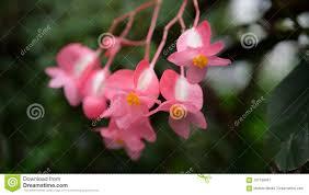 Mooi Behang Met Kleine Roze Bloemen Stock Afbeelding Afbeelding