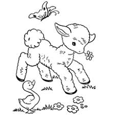 Small Picture Top 25 Free Printable Sheep Coloring Pages Online