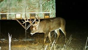 Whitetail Antler Growth Chart Top 5 Methods To Age A Buck Whitetail Habitat Solutions