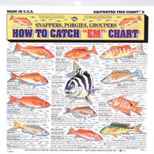 Saltwater Fish Chart Tightlines Fishermans Saltwater Fish Chart 6 Amazon Co Uk