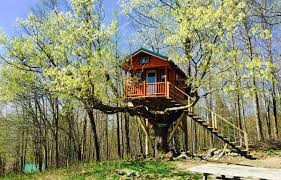 tree house pictures. VIEW VIDEO Tree House Pictures G