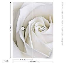 Fototapeta Květiny Bílá Růže