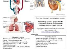 Chart Chart Of Human Body Systems Of Human Body Systems Stylized Jpg