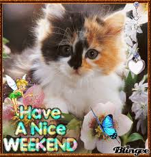 Image result for weekend cat gif