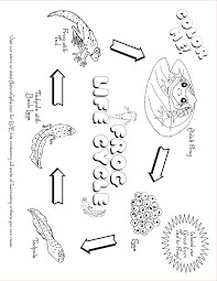Small Picture Butterfly Life Cycle Coloring Pages Miakenasnet