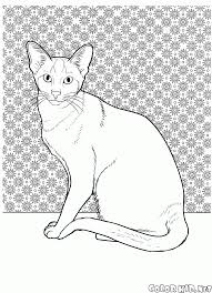 Cat The Free Coloring Pages