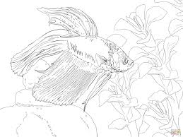 Small Picture Siamese Fighting Fish coloring page Free Printable Coloring Pages