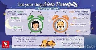 Dog Sleep Pattern Inspiration Let Your Dog Sleep Peacefully Dogalize