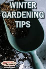 prepare for spring with these winter gardening tips garden gardening wintergardening texas