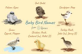 Baby Bird Age Chart Names For Baby Birds By Age And Species