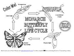 Small Picture Butterfly Life Cycle Coloring Page