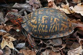 san go turtle tortoise society