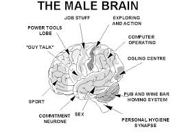 what women should know about men s brains as more and more research reveals the differences in the male and female brains it becomes easier for each gender to better understand the other and to