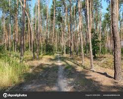 Bos Landschap Bomen Behang Boom Stockfoto Apxipro At Gmailcom