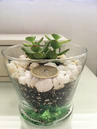 feng shui plants for office. Why The Jade Plant Is Money Magnet In Feng Shui Plants For Office