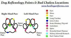 Pin By Megan Palmer Thome On Dog Stuff Reflexology Points