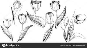 Tulipán Květ Ve Stylu Vektor Izolované Wildflower Stock Vektor