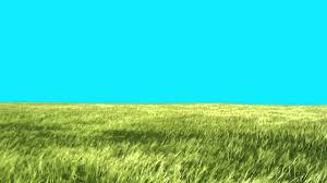 green grass field animated. Green Screen Lawn High Grass Moves With The Wind HD - Footage PixelBoom YouTube Field Animated T