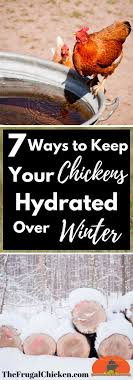 How To Raise Backyard Chickens  Outdoor GoodsHow To Keep Backyard Chickens