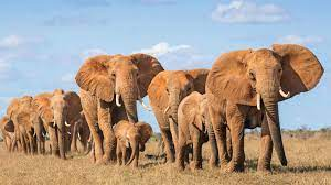 Elephant Family Wallpapers - Top Free ...