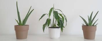 Luftreinigende Pflanzen Fürs Schlafzimmer Lagerhaus Wechselgau