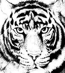 tiger face drawing pencil. Brilliant Face Bengal Tiger From India On Face Drawing Pencil