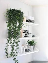 Love growing plants indoors? Some of the best indoor vines and climbers  that are easy