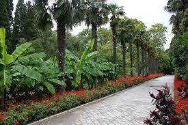 Никитский ботанический сад в Крыму растения цветы деревья  Никитский ботанический сад в Крыму растения цветы деревья цены на билеты