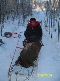 fairbanks ak a really great dog sled ride in alaska at 36 below