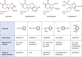 Gram Positive Antibiotics Chart Mechanisms Of Antibacterial Drugs Microbiology