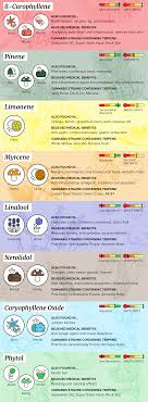 Terpene Temperature Chart What Are Terpenes How They Affect Your High Wikileaf