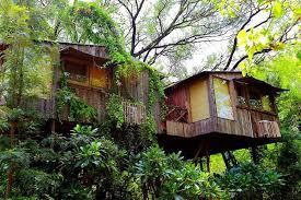 tree house resort. Tree House Resort A