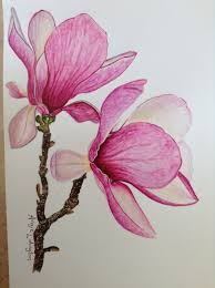 Magnolia Flowers Painted By Me In Watercolours Using An Anna Mason