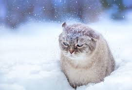 Image result for Snow photos
