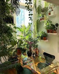 indoor plants house plants decor