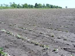 Soybean Hail Damage Chart Hail Damage To Soybean Crops Umn Extension