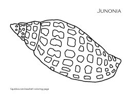 Small Picture Coloring Pages Seashells by Millhill