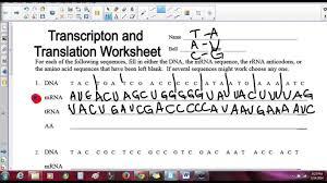 transcription and translation practice youtube worksheet answer ...
