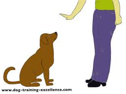 Puppy Training Hand Signals Dog Training Guide