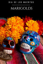 the role marigolds play in dia de los muertos cempas uacute chil learn more about role that marigolds play in dia de los muertos celebrations