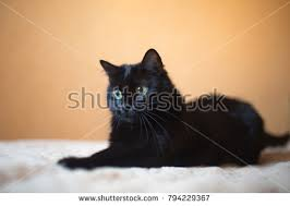 cute black cats with yellow eyes. Brilliant Cute A Cute Black Cat With Big Yellow Eyes Hunts Intended Cute Black Cats With Yellow Eyes P