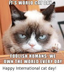 Bildergebnis für international cat day
