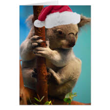 Christmas Koala Greeting Cards | Zazzle