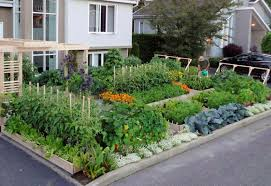 Urban Vegetable Garden Design