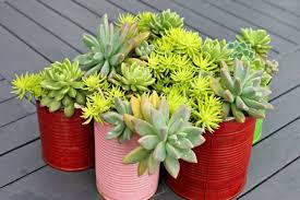 Succulent Garden Designs Enchanting 48 Succulent Planting Ideas With Tutorials Succulent Garden Ideas