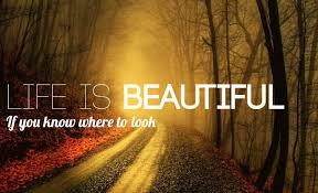 Life Is Beautiful Quotes Delectable Life Is Beautiful Quote