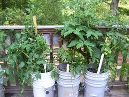 bucket gardening. Gardening Basics - Planters, Beds, And Trellises Bucket