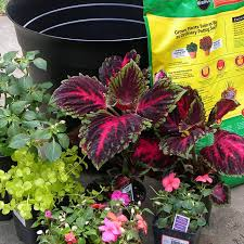 Small Picture South Central Gardening Container Garden Ideas for TX and OK
